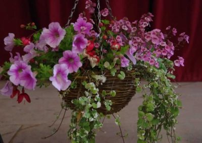 Flower Show - IMGP0659