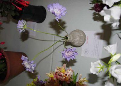 Flower Show - IMGP0853