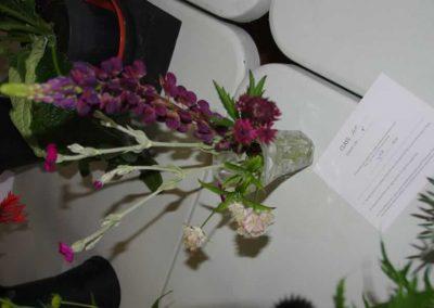 Flower Show - IMGP0863