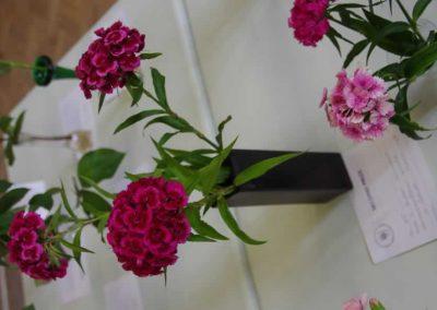 Flower Show - IMGP0893