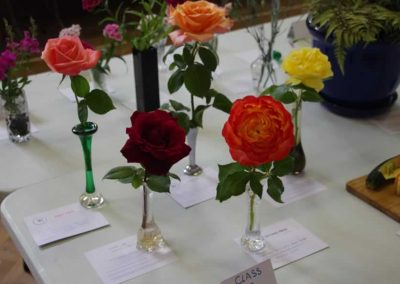 Flower Show - IMGP0897