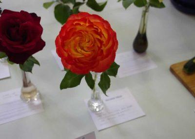Flower Show - IMGP0904