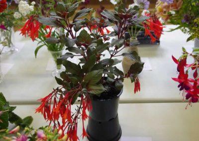 Flower Show - IMGP0923