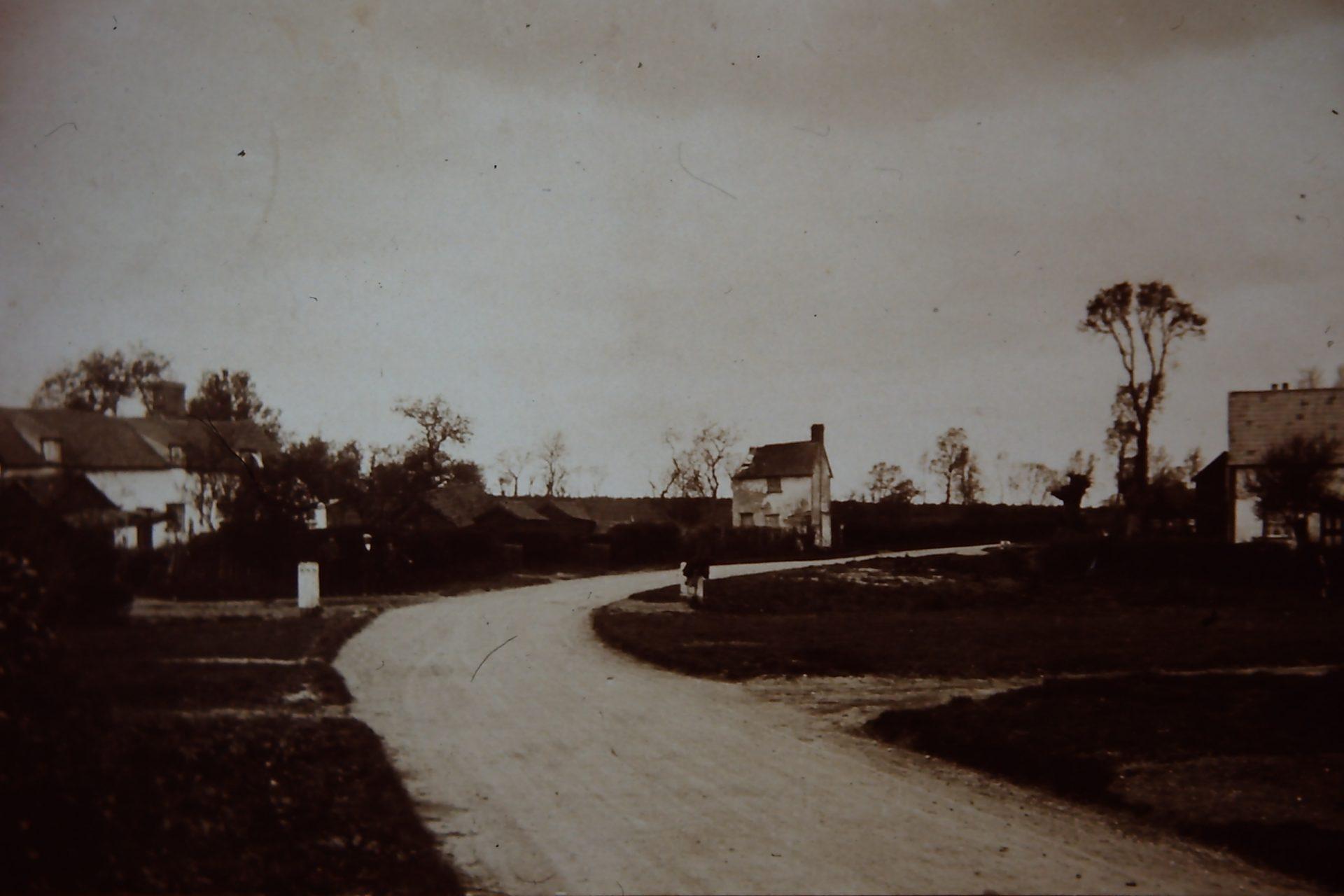 Wickhambrook - Coltsfoot