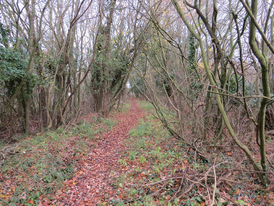 Wickhambrook Walk 2 - footpath