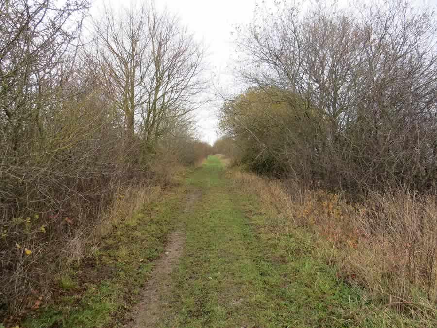 Wickhambrook Walk 2 - green lane
